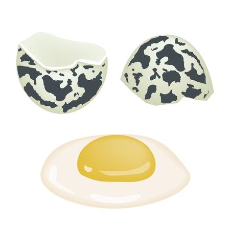 dietary fiber: Fresh Food, An Illustration Cracked Quail Egg Good Source of Dietary Fiber, Vitamins and Minerals  Illustration