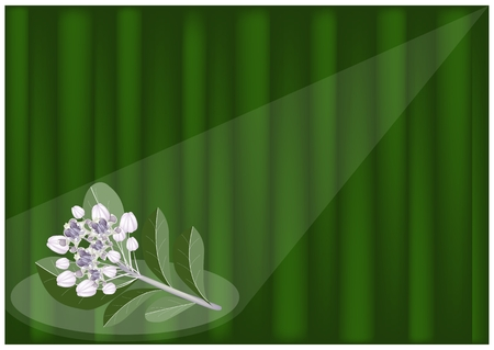 milkweed: An Illustration of Fresh Calotropis Gigantea Flower or Crown Flower on Green Banana Leaf Background with Copy Space for Text Decorated.