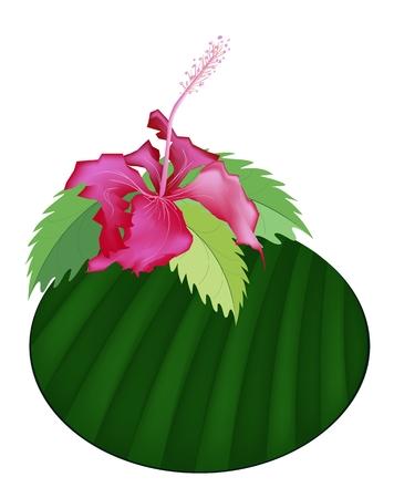 banana leaf: Beautiful Flower, Illustration Group of Fresh Red Hibiscus Flowers or Bunga Raya on Banana Leaf Isolated on A White Background  Illustration