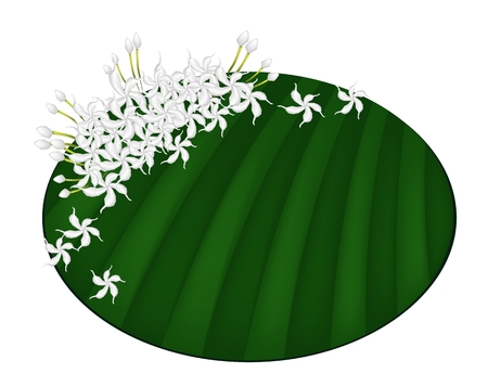 Beautiful Flower, An Illustration Fresh White Common Gardenias or Cape Jasmine Flowers on Green Banana Leaf Isolated on A White Background  Vector