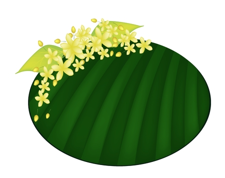 golden shower: Beautiful Flower, Illustration Yellow Color of Cassia Fistula or Golden Shower Flower on Green Banana Leaf Isolated on A White Background