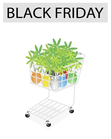 beautifu: A Shopping Cart Full with Various Colors of Beautifu Green Tree for Black Friday Shopping Season and Biggest Discount Promotion in A Year.  Illustration