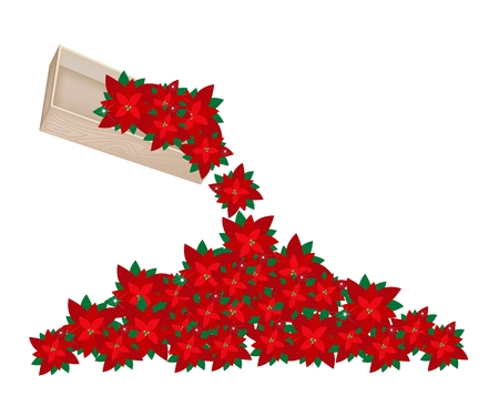 An Illustration Heap of Christmas Flowers or Red Poinsettia Spilled from Wooden Box on The Floor for Christmas Celebration. illustration