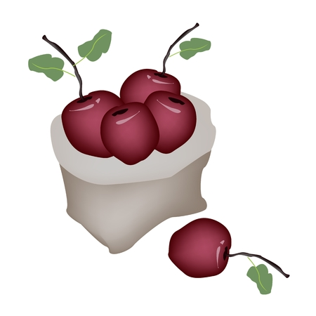 garden eden: An Illustration of A Pail of Delicious Fresh Red Apple With Green Leaves in A Canvas Bag Isolated on A White Background.