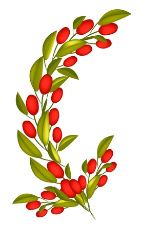 Vector Illustration of Red Ripe Olives and Green Leaves Hanging on Tree Branch Isolated on White Background. Vector