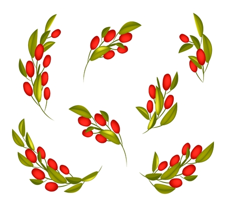 Illustration Collection of Fresh Red Ripe Olives and Green Leaves Hanging on Tree Branch Isolated on White Background. Vector