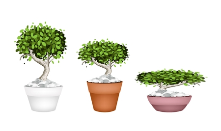 peepal tree: Houseplant, Illustration Collection of Beautiful Bonsai Tree or Small Plants in Flowerpots for Garden Decoration.