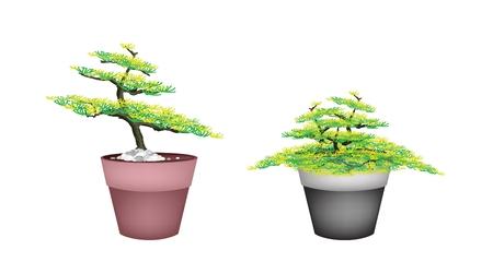 Houseplant, Illustration of Two Beautiful Bonsai Fir Tree in Flowerpots for Garden Decoration. Vector