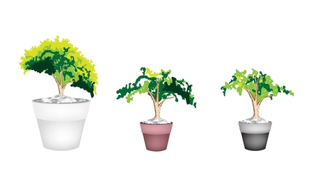 Houseplant, Illustration of Three Beautiful Green Plant in A Ceramic Flowerpot for Garden Decoration Vector