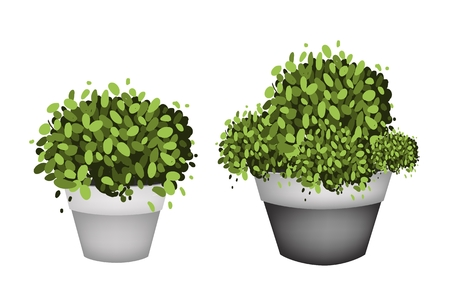 Houseplant, Illustration of Green Trees and Plants in Ceramic Flower Pots or Clay Plant Pots  for Garden Decoration. Illustration