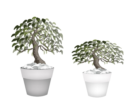 tree planting: Houseplant, Illustration of Two Beautiful Bonsai Tree or Small Plants in Flowerpots for Garden Decoration.