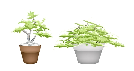 Houseplant, Illustration of Two Beautiful Bonsai Tree in A Flowerpot for Garden Decoration. Vector