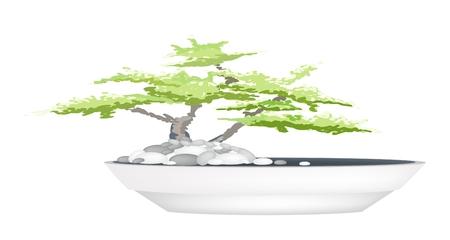 Kamerplant, Illustratie van een mooie Bonsai Boom in een bloempot voor tuin decoratie. Stockfoto - 33683395