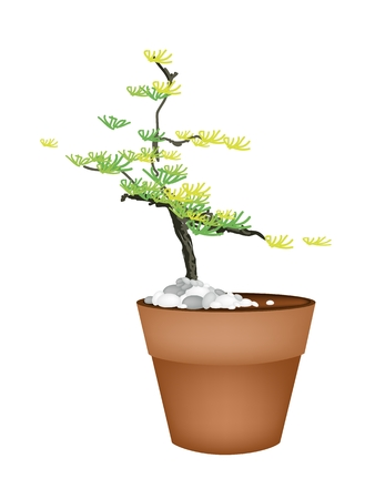 Houseplant, Illustration of A Small Bonsai Fir Tree in Terracotta Pot for Garden Decoration. Vector