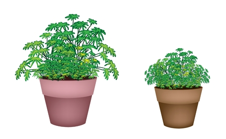 houseplant: Houseplant, An Illustration of Two Beautiful Green Plant in Terracotta Flower Pots for Garden Decoration.