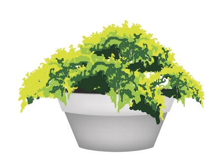 Houseplant, An Illustration of Beautiful Green Plant in A Ceramic Flowerpot for Garden Decoration Vector