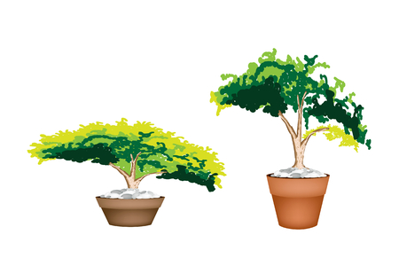 hedge trees: Houseplant, Illustration of Two Beautiful Green Plant in A Ceramic Flowerpot for Garden Decoration