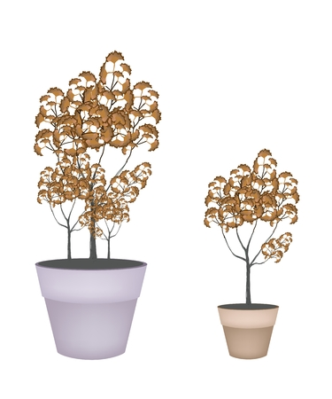 flowerpot: Illustration of Abstract Landscaping Tree Symbol or Isometric Brown Tree in A Flowerpot, for Garden Decoration. Illustration