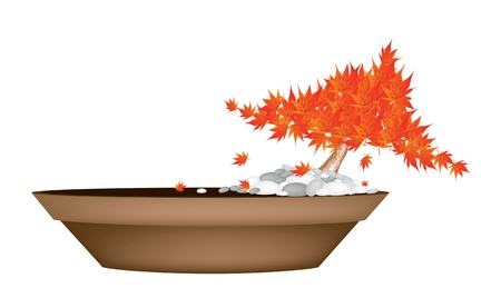 japanese maple: Houseplant, Illustration of Exotic Maple Bonsai or Acer Bonsai Tree in A Flowerpot for Garden Decoration. Illustration