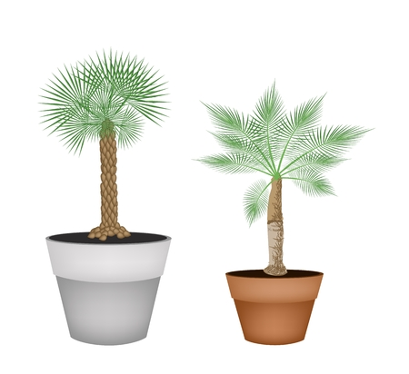 terracotta: Houseplant, Illustration of Landscaping Tree Symbols of Two Isometric Palm Trees in Terracotta Flower Pots for Garden Decoration.