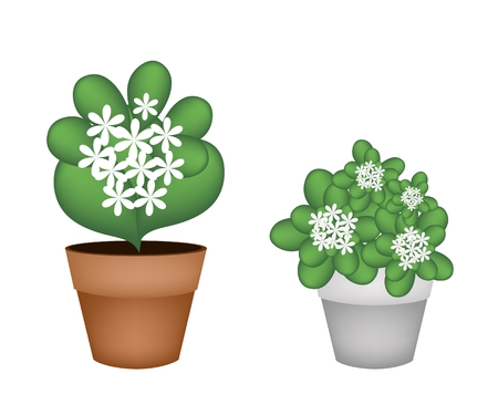 hedge trees: Flower and Plant, Illustration of Jasmine Flowers and Jasmine Plants in Two Flowerpot for Garden Decoration.