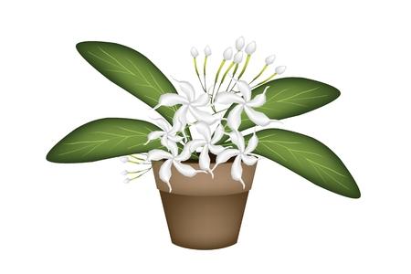 Beautiful Flower, Illustration of Lovely White Common Gardenias or Cape Jasmine Flowers in Terracotta Flower Pot for Garden Decoration. Vector