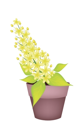 Beautiful Flower, Illustration Yellow Color of Cassia Fistula or Golden Shower Flower in Terracotta Pot for Garden Decoration. Vector