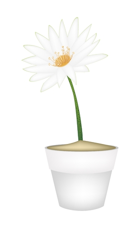 Beautiful Flower, The Bright and Beautiful of A White Water Lily or Lotus Flower in Terracotta Pot for Garden Decoration. Vector