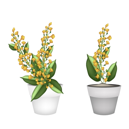 terracotta: Beautiful Flower, Illustration Yellow Color of Padauk Flower or Papilionoideae Flower in Terracotta Pot for Garden Decoration.