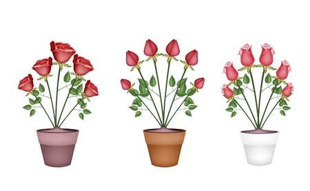 terracotta: A Symbol of Love, Illustration of Beautiful Red Roses in Terracotta Flower Pots for Garden Decoration.