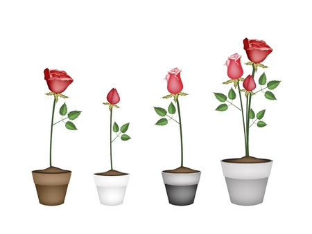 terracotta: Symbol of Love, Illustration Collection of Beautiful Red Roses in Terracotta Flower Pots for Garden Decoration.