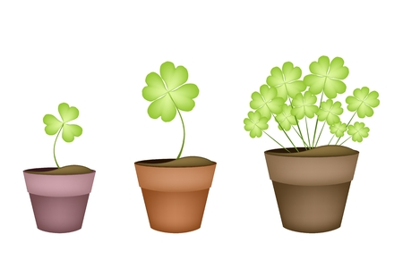 cloverleafes: Symbols for Fortune and Luck, Illustration of Fresh Four Leaf Clover Plants or Shamrock in Terracotta Pots for St. Patricks Day Celebration.