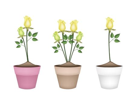 gele rozen: Een symbool van liefde, illustratie van mooie gele rozen in Terracotta Bloempotten voor tuin decoratie.