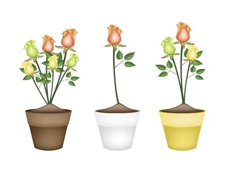 patrones de flores: Un s�mbolo de amor, Ilustraci�n de hermosa amarillo, naranja y rosas verdes en terracota Macetas para decoraci�n de jard�n. Vectores
