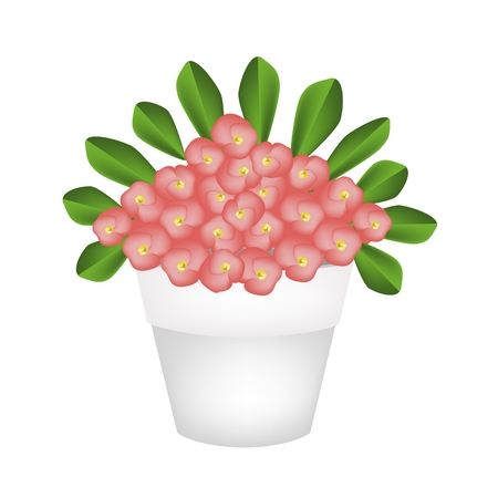thorn bush: Beautiful Flower, An Illustration of Crown of Thorn or Euphorbia Milii Flowers with Green Leaves in Terracotta Flower Pot for Garden Decoration. Illustration