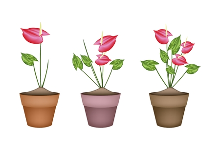 Beautiful Flower, Illustration Heart Shaped Spathe of Blooming Red Anthurium Flowers or Flamingo Flower in Terracotta Flower Pot for Garden Decoration. Vector