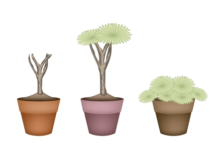 terracotta: Ecological Concept, Illustration Tree Symbols or Isometric Green Tree of Dragon Tree in Terracotta Flower Pot for Garden Decoration.