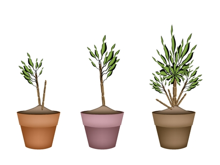 plant pot: Illustration of Dracaena Plant or Yucca Tree in Terracotta Flower Pot for Garden Decoration.