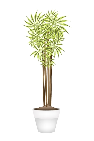 Home Interior, An Illustration of Beautiful Dracaena Plant or Yucca Tree in Terracotta Flower Pots for Garden Decoration. Vector