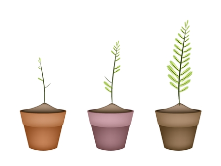 terracotta: Ecological Concept, Landscaping Tree Symbols or Isometric Green Fern and Fern Leaves in Terracotta Flower Pots for Garden Decoration. Illustration