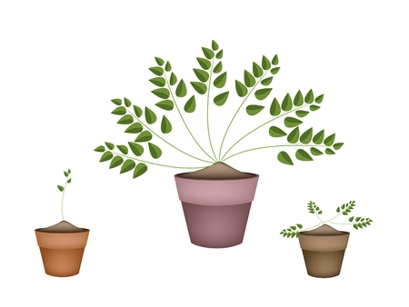 terracotta: Ecological Concept, Illustration Collection of Green Plants in Terracotta Flower Pots for Garden Decoration.