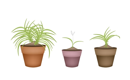 terracotta: Ecological Concept, Illustration Collection of Beautiful Dracaena Plant or Yucca Tree in Terracotta Flower Pots for Garden Decoration.