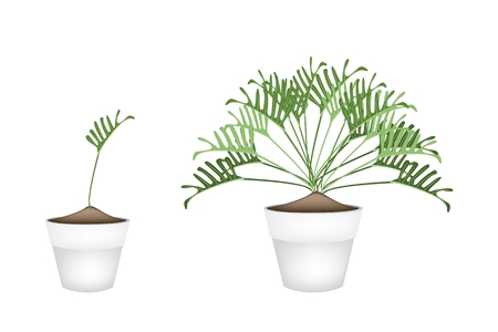 philodendron: Ecological Concept, Illustration of Philodendrum Plant in Terracotta Flower Pots for Garden Decoration.
