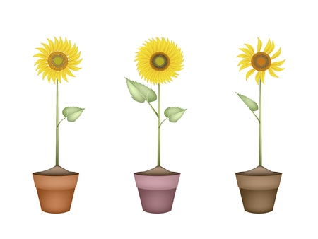An Illustration Bright and Beautiful Yellow Colors of Sunflowers in Tight Bundle in Terracotta Flower Pot for Garden Decoration. illustration