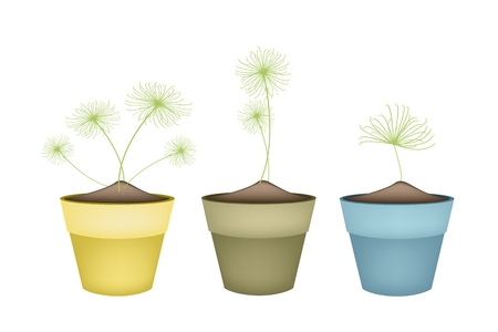Ecological Concept, Illustration Collection of Egyptian Cyperus Papyrus or Cyperaceae Plant in Terracotta Flower Pots for Garden Decoration.