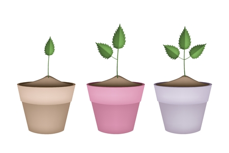 houseplant: Houseplant, Illustration of Fresh Green Trees and Plants in Ceramic Flower Pots or Clay Plant Pots  for Garden Decoration. Illustration