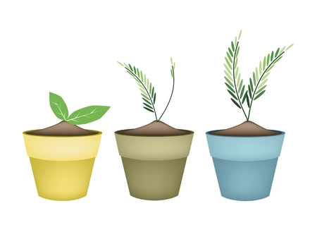 Houseplant, Illustration of Beautiful Green Trees and Plants in Ceramic Flower Pots or Clay Plant Pots  for Garden Decoration. Vector