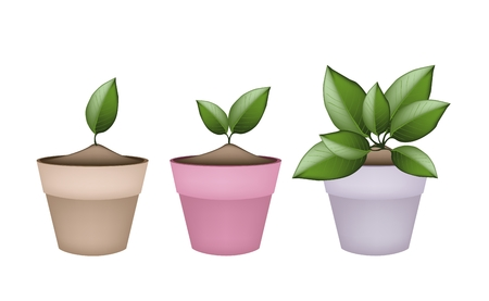 hedge trees: Houseplant, Illustration of Green Trees and Plants in Ceramic Flower Pots or Clay Plant Pots  for Garden Decoration. Illustration