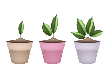 houseplant: Houseplant, Illustration of Green Trees and Plants in Ceramic Flower Pots or Terracotta Plant Pots  for Garden Decoration.