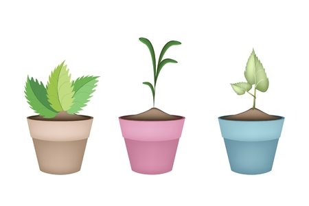 floriculture: Houseplant, Illustration of Green Trees and Plants in Ceramic Flower Pots or Terracotta Plant Pots  for Garden Decoration.